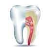 Endodoncija lečenje zuba